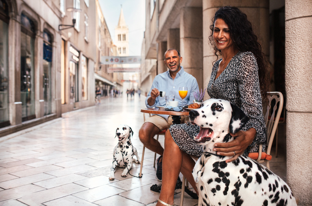 Dalmatian dogs at home in Zadar (Source: Zadar Region)